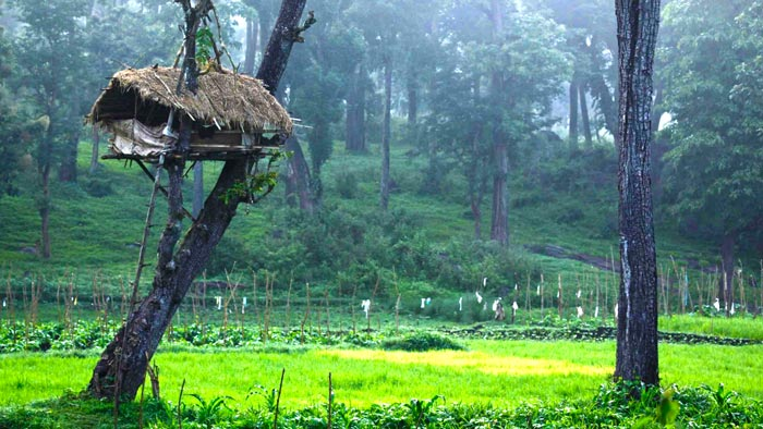 wayanad 3 day packages
