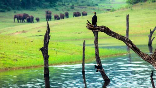 family package to thekkady