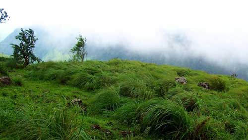munnar family package