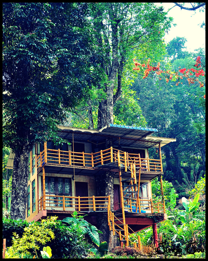 Low Cost Tour Packages In Kerala