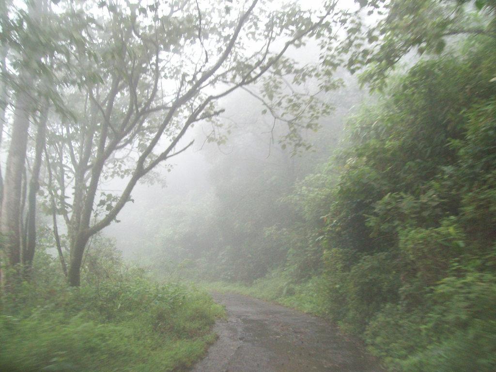 Gavi Forest, Pathanamthitta