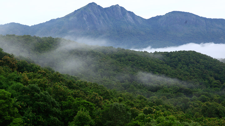 Silent Valley National Park, Palakkad