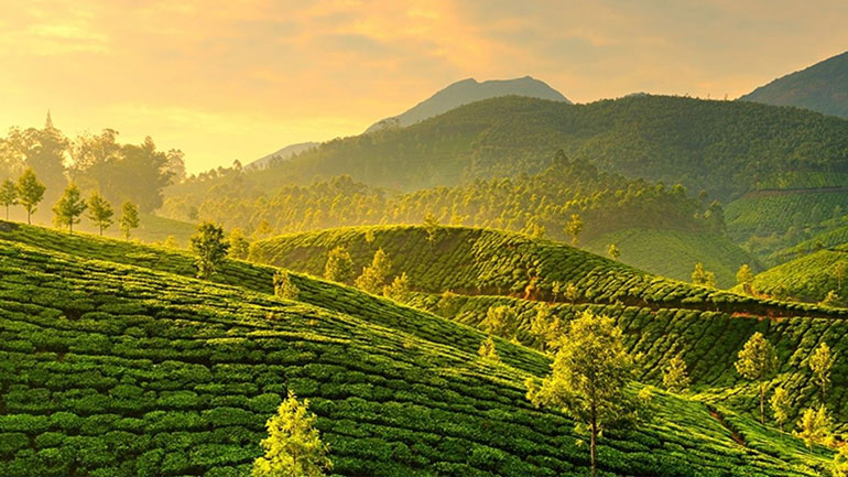 munnar sunrise greenery package