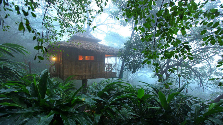 munnar tree house tour package